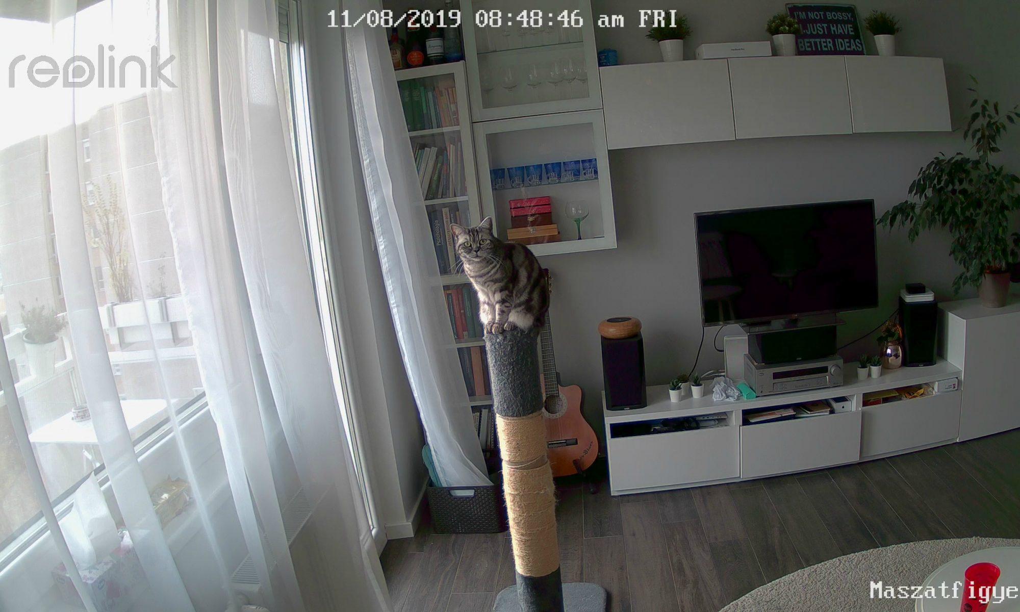 Babfigyelő kisállatfigyelő